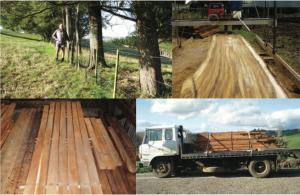 Blackwood-milling1